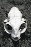02个动物头骨 库存照片