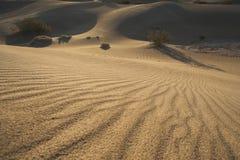 02个沙丘豆科灌木沙子日出 免版税图库摄影