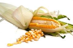 02个玉米系列 免版税库存图片