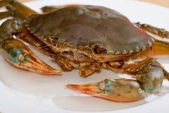 02个螃蟹系列 库存照片