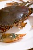 02个螃蟹系列 库存图片