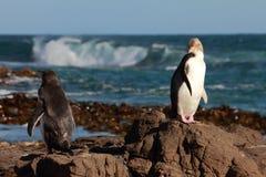 02企鹅 免版税图库摄影