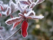 02冻结叶子 图库摄影