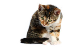 02好奇的猫一点 库存图片