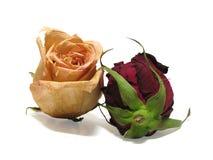 02朵停止的玫瑰 图库摄影