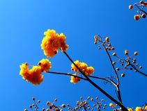 02朵花黄色 图库摄影