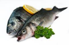 02条鱼新海鲜白色 免版税图库摄影