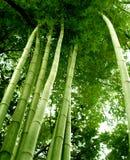 02竹子结构树 库存照片