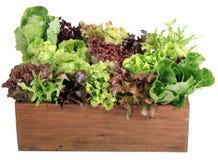 02蔬菜 免版税库存照片