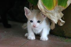 02 γάτες Στοκ Φωτογραφία