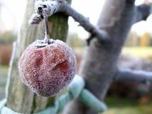 02 παγωμένοι καρποί Στοκ Εικόνα