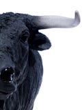 02 испанского языка быка Стоковая Фотография RF