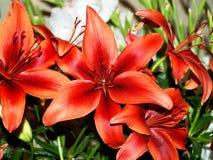 02 цветастых цветка Стоковые Фотографии RF
