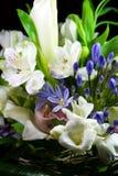 02 цветка Стоковая Фотография RF