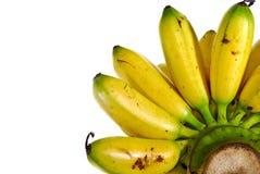 02 bananowej serii Zdjęcia Royalty Free