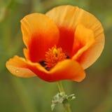 02 blomma pund Royaltyfria Foton