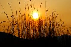 02 broga wzgórza wschód słońca Zdjęcia Royalty Free