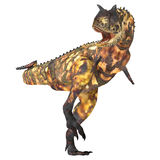 02 carnotaurus 免版税图库摄影