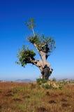 02 drzewo Zdjęcie Royalty Free
