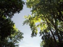 02 past trees upp Arkivbild
