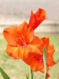 02 slappa blommor Royaltyfria Bilder