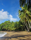 02 strand karibiska tobago Royaltyfria Foton