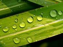 02 zrzutu liści wody. Obraz Royalty Free