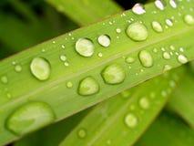 02 zrzutu liściach wody Obrazy Stock