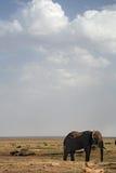 020个动物大象 图库摄影