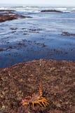 03个小龙虾 库存图片