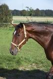 03匹马 库存照片