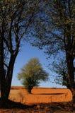 03结构树 免版税图库摄影