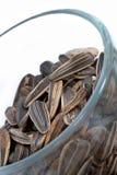 03 ξηρές σειρές σπόρων πεπονιώ Στοκ φωτογραφία με δικαίωμα ελεύθερης χρήσης