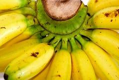 03 σειρές μπανανών Στοκ Εικόνες