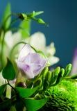 03 цветка Стоковые Фото