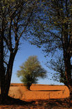 03 drzewo Fotografia Royalty Free