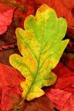 03 jesiennych liści Zdjęcia Stock