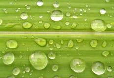 03 kropli wody. Zdjęcie Stock