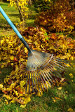 03 leafs krattar royaltyfria bilder