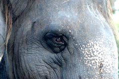 03 słonia Obrazy Royalty Free