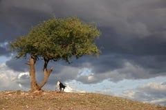 030非洲横向serengeti 免版税库存图片