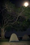 032非洲横向ngorongoro 免版税库存照片