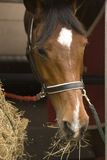 033匹马跳 免版税图库摄影