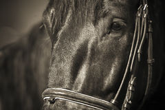 034 skaczący koni. Obrazy Royalty Free