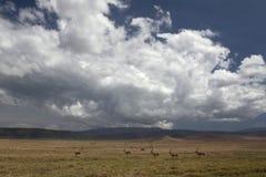 036非洲横向ngorongoro 免版税库存图片