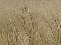 04个海滩connemara 库存照片