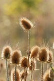 04植物名 免版税库存图片