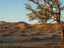 04片沙漠namib 免版税库存图片