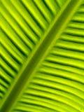 04片香蕉叶子 免版税库存照片