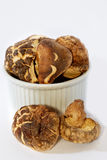 04 серии грибов Стоковое фото RF